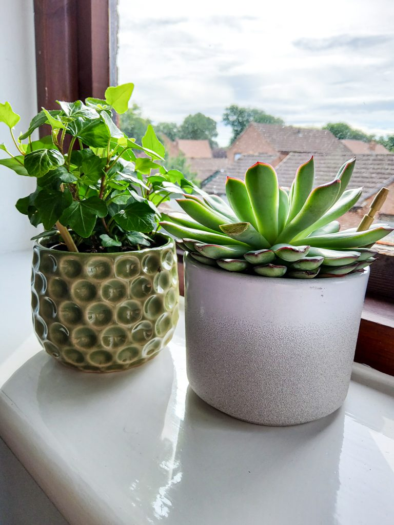 budget friendly home decor foliage plant and succulent